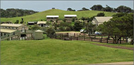 Ace Hi Riding Ranch - Maitland Accommodation