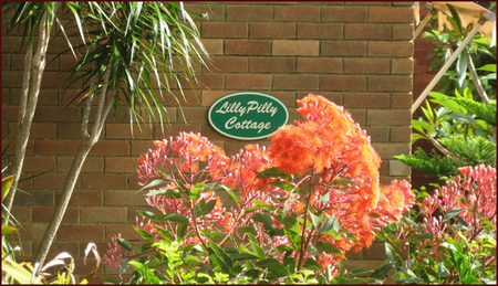 Lillypilly - Maitland Accommodation