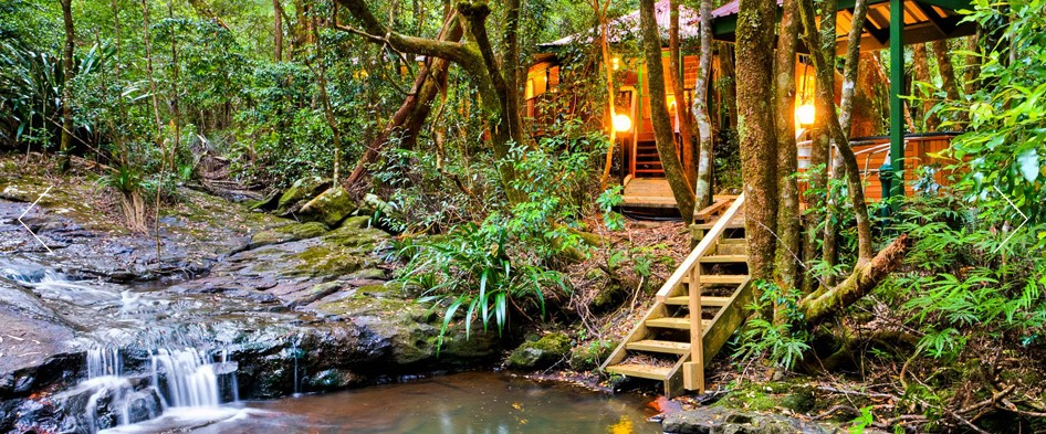 The Mouses House - Rainforest Retreat - Maitland Accommodation
