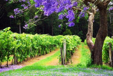 Bago Vineyards - Maitland Accommodation