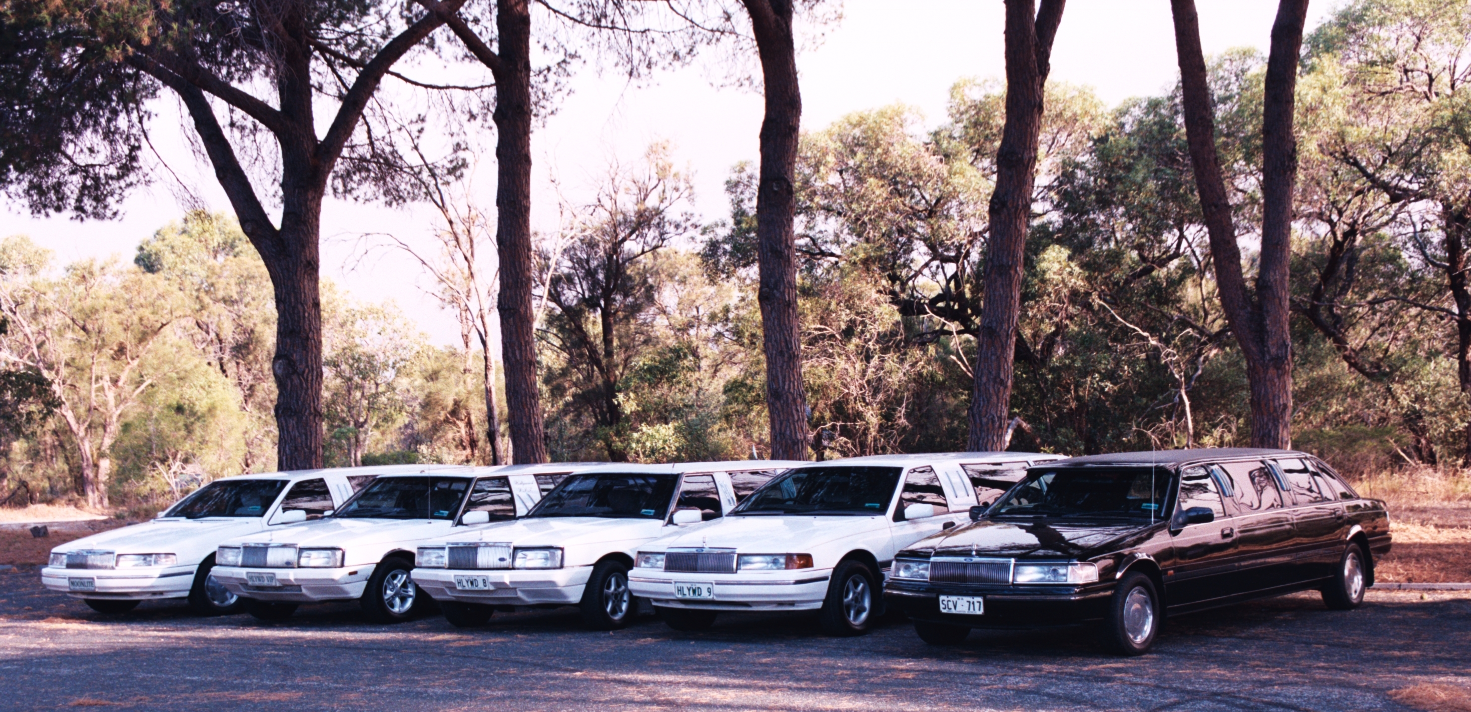 Hollywood VIP Limousines - Maitland Accommodation