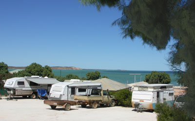 Blue Dolphin Caravan Park and Holiday Village - Maitland Accommodation