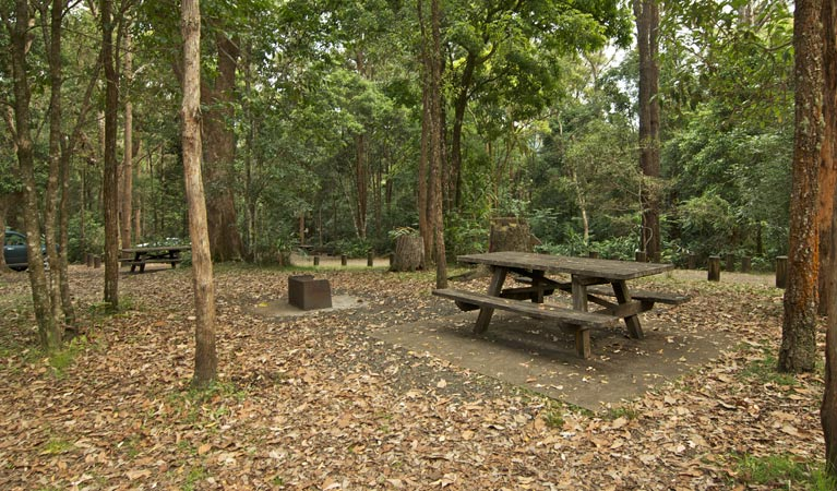 Sheepstation Creek campground - Maitland Accommodation