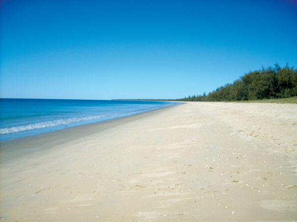 Woodgate Beach Tourist Park - Maitland Accommodation