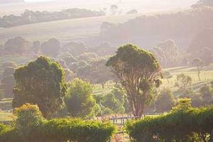 Mackas Farm - Maitland Accommodation