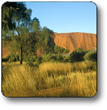 Uluru - Kata Tjuta National Park - Maitland Accommodation