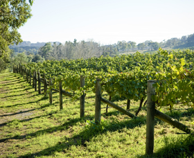 Surveyor's Hill Vineyards - Maitland Accommodation