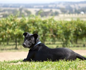 Moothi Estate Vineyard and Cellar Door - Maitland Accommodation
