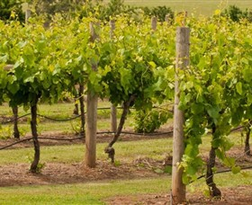 Mt Coghill Vineyard - Maitland Accommodation