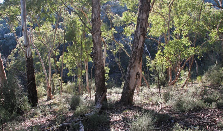 Mount Gray walking track - Maitland Accommodation