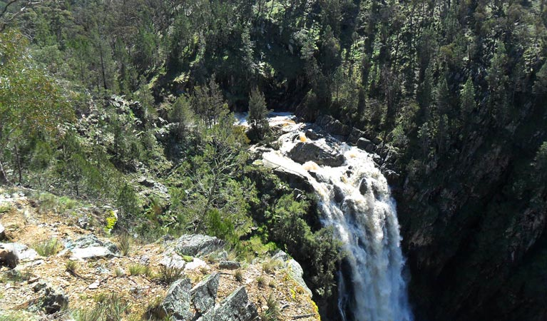 Grove Creek Falls walking track - Maitland Accommodation
