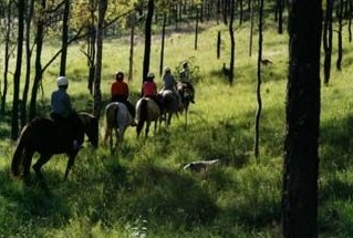 Hunter Valley Horse Riding and Adventures - Maitland Accommodation