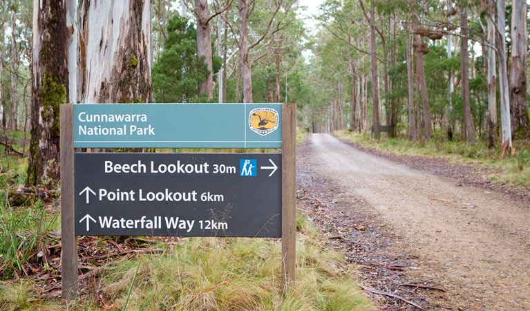 Beech lookout - Maitland Accommodation