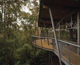 Tarkine Forest Adventures - Dismal Swamp - Maitland Accommodation