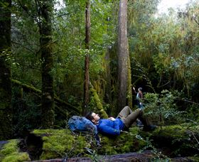 The Tarkine Drive - Maitland Accommodation
