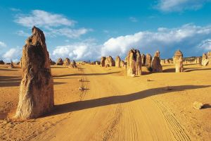 Pinnacles Desert Koalas and Sandboarding 4WD Day Tour from Perth - Maitland Accommodation