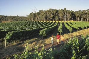 Margaret River Caves Wine and Cape Leeuwin Lighthouse Tour from Perth - Maitland Accommodation