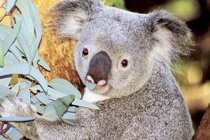 Perth Zoo General Entry Ticket and Sightseeing Cruise - Maitland Accommodation
