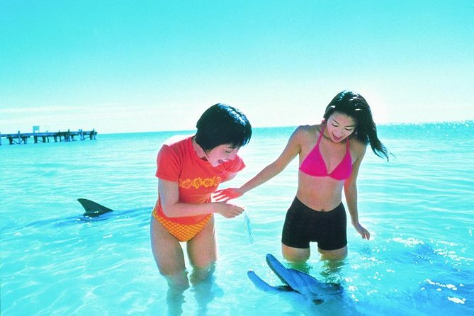 Monkey Mia Dolphins  Shark Bay Air Tour From Perth - Maitland Accommodation