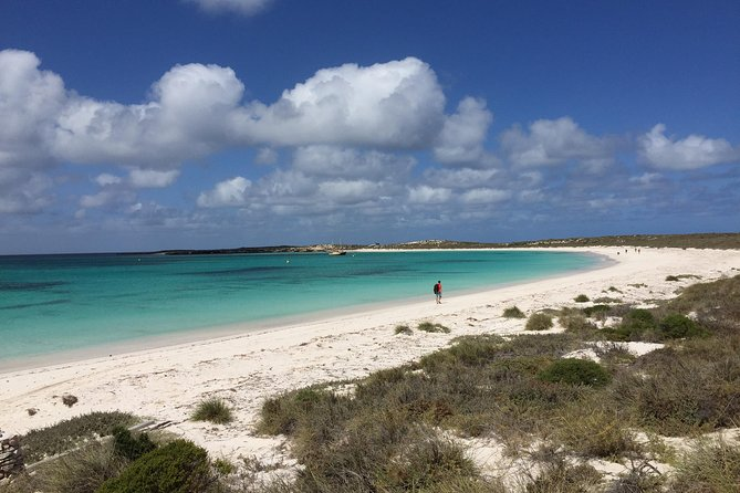 Abrolhos Island Half Day Fly and Flipper - Maitland Accommodation