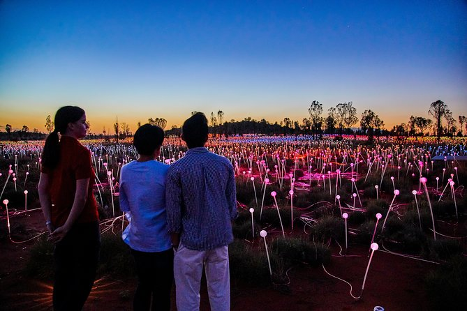 Uluru Field of Light Sunrise Tour - Maitland Accommodation