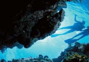 Deep Sea Divers Den - Maitland Accommodation