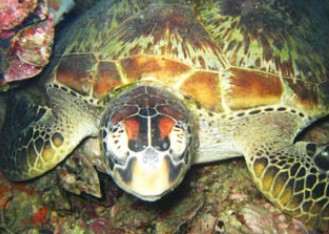 Adrenalin Snorkel and Dive - Maitland Accommodation