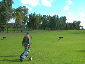Coffin Bay Golf Club - Maitland Accommodation