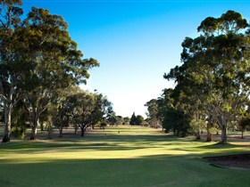 Loxton Golf Club - Maitland Accommodation